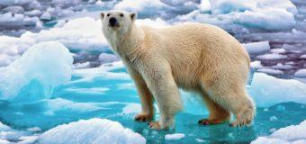 27 февраля – Международный день полярного медведя