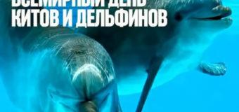 19 февраля – Всемирный день защиты морских млекопитающих