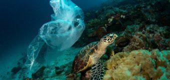 Ученые выяснили, почему морские черепахи съедают пластиковый мусор