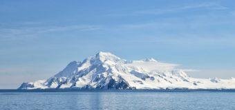 Мидии выжили в холодных антарктических водах