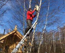 Федор Конюхов на самоизоляции построил более 300 скворечников