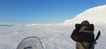 В национальном парке «Русская Арктика» наступило полярное лето
