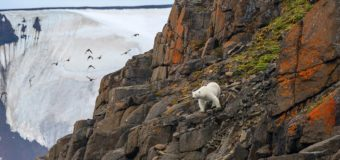 Ученые из «Роснефти» и нацпарка «Русская Арктика» обнаружили бактерии, очищающие почвы от нефтяных загрязнений
