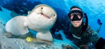 Исследователи мира акул – новые партнеры OCEAN-TV