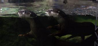В аквариуме с Беней и Феней (видео)