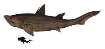 Учёные из Австрии раскрыли тайны древней акулы из мелового периода
