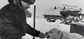 Детям о полярниках (видео)