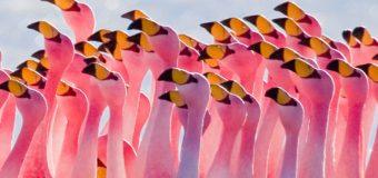 Десятки тысяч фламинго наводнили Мумбаи