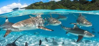 Власти Сейшельских островов расширяют заповедные зоны для защиты черепах, дюгоней и акул (видео)