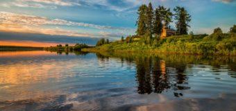 Экологи просят вернуть защитный статус лесам в Архангельской области