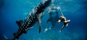 Экотуризм с акулами меняет отношение людей к океану
