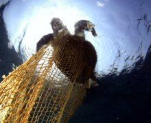 Группы помощи морским животным создадут на Дальнем Востоке по президентскому гранту
