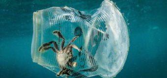 Количество микропластика в Мировом океане достигло критических значений