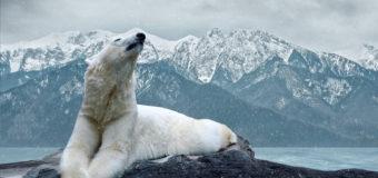 Новый проект WWF: Арктика – безопасный дом для каждого