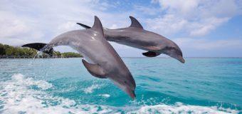 Крымские волонтёры нашли двух детёнышей дельфинов с ножевыми ранениями