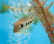 Абсолютные хищники южноамериканского континента появились в Приморском океанариуме