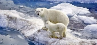 Как моллюски попали в Арктику