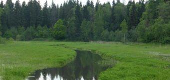 Минэкологии наказало одинцовских кондитеров за загрязнение реки