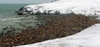 Две особо охраняемые природные территории планируют создать на Чукотке