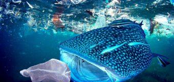 """Учёные """"взвесили"""" океанический пластик"""