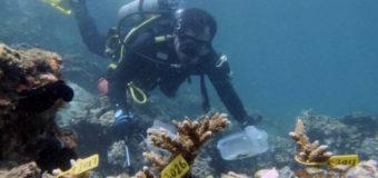 """Дайверы Фуджейры выращивают искусственный """"мега-риф"""", чтобы сохранить рифовых акул"""