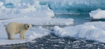 В водоемах канадской Арктики нашли волокна от джинсов