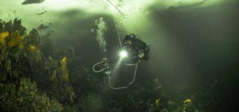 Погружение в «Дикий подводный мир»