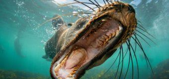 Фестиваль подводной фотографии «Дикий подводный мир» приглашает участников