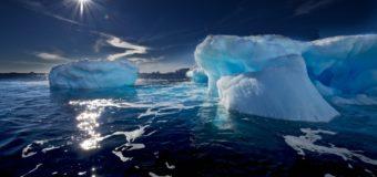 Ученые обнаружили в Антарктиде морских пауков