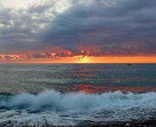 Севастопольские гидробиологи ищут способы очистить Черное море от нефти (видео)