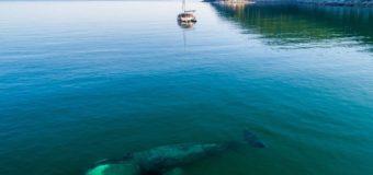 Где рождаются киты?