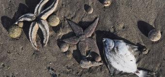 95% обитателей Авачинской бухты погибли