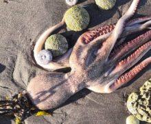 На Камчатке нашли новые места выброса животных на берег