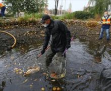 """Московских карпов и карасей отправили на зимовку из прудов в парке """"Зарядье"""""""