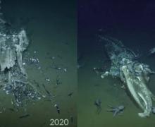 Что произошло за год с мертвым китом на дне океана (видео)