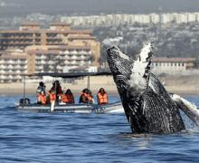 Ученый раскрыл удивительные факты о китах