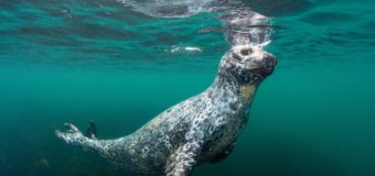 На Камчатке организуют непрерывный мониторинг состояния экосистемы Мирового океана