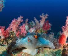 За последние 25 лет погибла половина кораллов Большого барьерного рифа