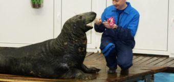 В Мурманском океанариуме отметили день рождения тюленя Фили
