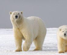 """27 ноября для школьников пройдёт экологический онлайн-урок """"Открываем Арктику вместе"""""""