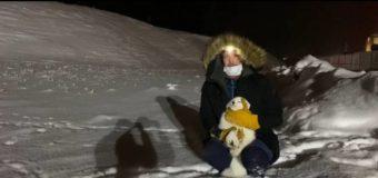 Ямальские ученые «охомутали» первого песца на Гыдане