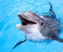 WWF просит власти России о новых правовых мерах по защите морских млекопитающих