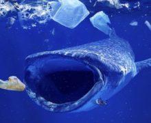 Фото дня: пластик в океане