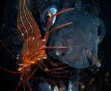 Фото дня: жизнь под водой