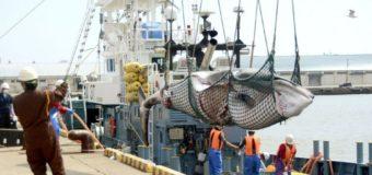 Япония возобновила коммерческий китобойный промысел