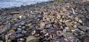На Камчатке перестали цвести водоросли, из-за которых погибли морские животные