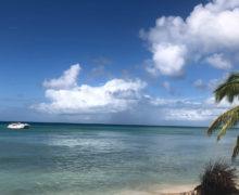 Редких китообразных обнаружили у побережья Мексики