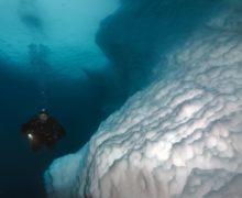 Что растет под арктическим морским льдом