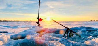 Фото дня: кот на рыбалке