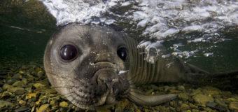 Тюлени в Антарктике